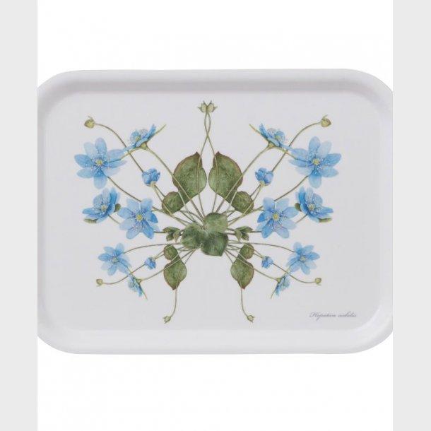 Bakke – Blå anemone